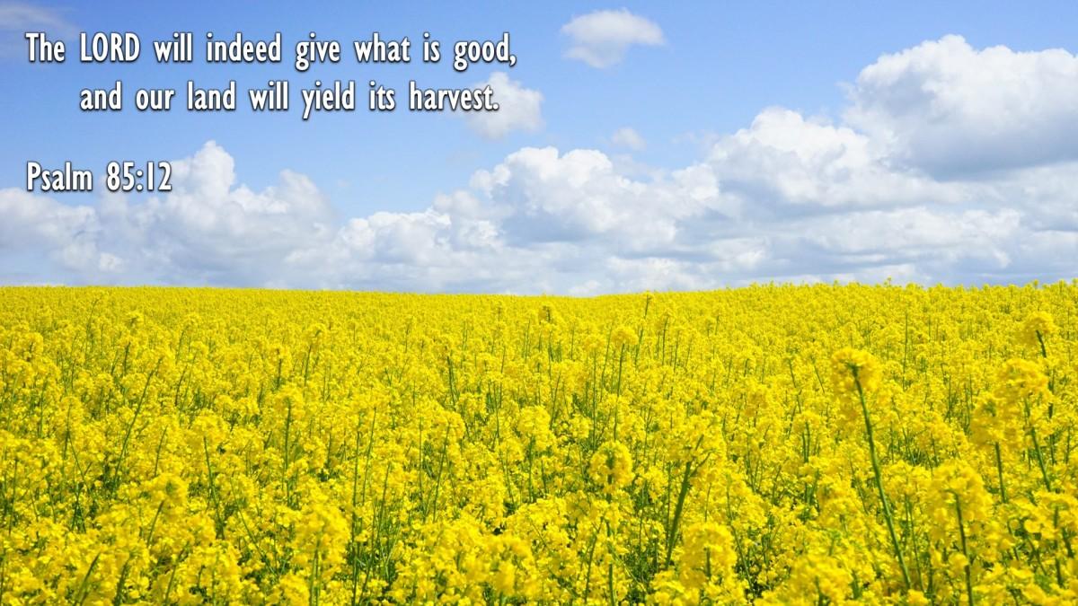 Psalm 85:12
