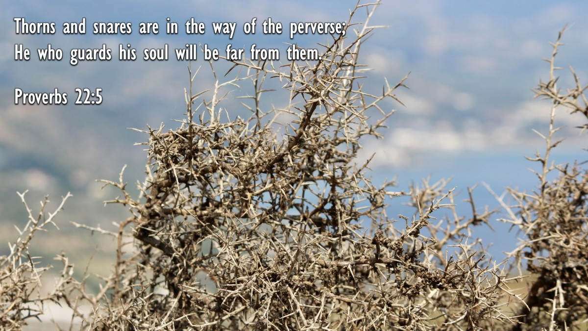 Proverbs 22:5