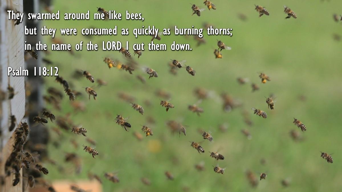 Psalm 118:12